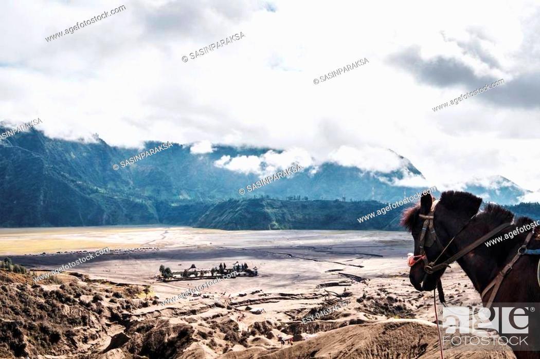 Stock Photo: The horse enjoying beautiful view at Mount Bromo, Indonesia.
