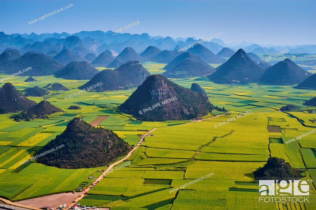 Stock Photo: China, Yunnan, Luoping, Fields of rapeseed flowers in bloom.