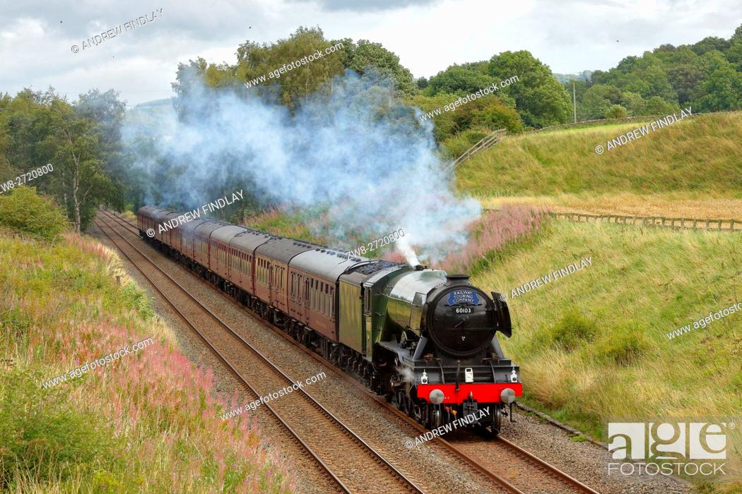Stock Photo: Flying Scotsman steam train LNER A3 Class 4-6-2 no 60103, in a cutting at Morralee, Bardon Mill, Newcastle & Carlisle Railway (N&CR), Northumberland, England.