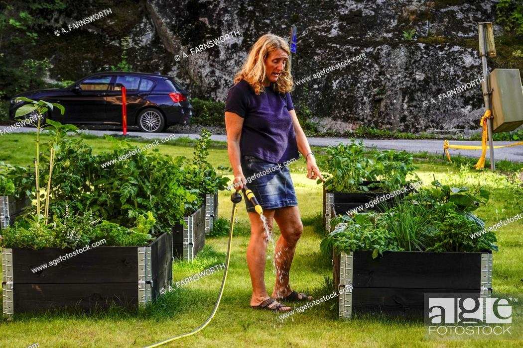Stock Photo: Stockholm, Sweden A woman outside her apartment building watering a plant box.