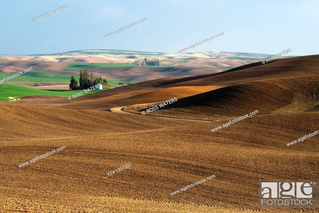 Stock Photo: Palouse rolling hills in Washington State USA.