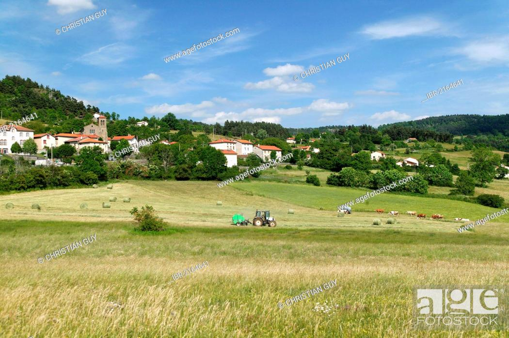 Stock Photo: Haymaking and village of Chadron, valley of Loire, Haute Loire, Auvergne, France, Europe.