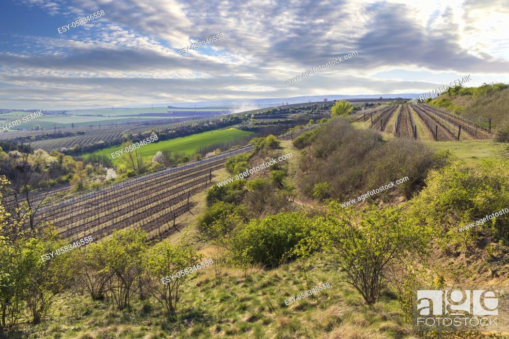 Stock Photo: Spring vineyard near Lampelberk, Znojmo region, Southern Moravia, Czech Republic.