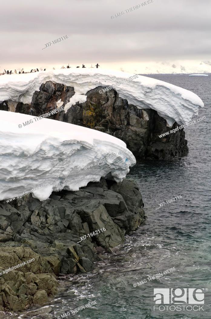 Imagen: Chinstrap penguin Pygoscelis Antarctica rookery, Hydrurga rocks, Antarctic Peninsula.