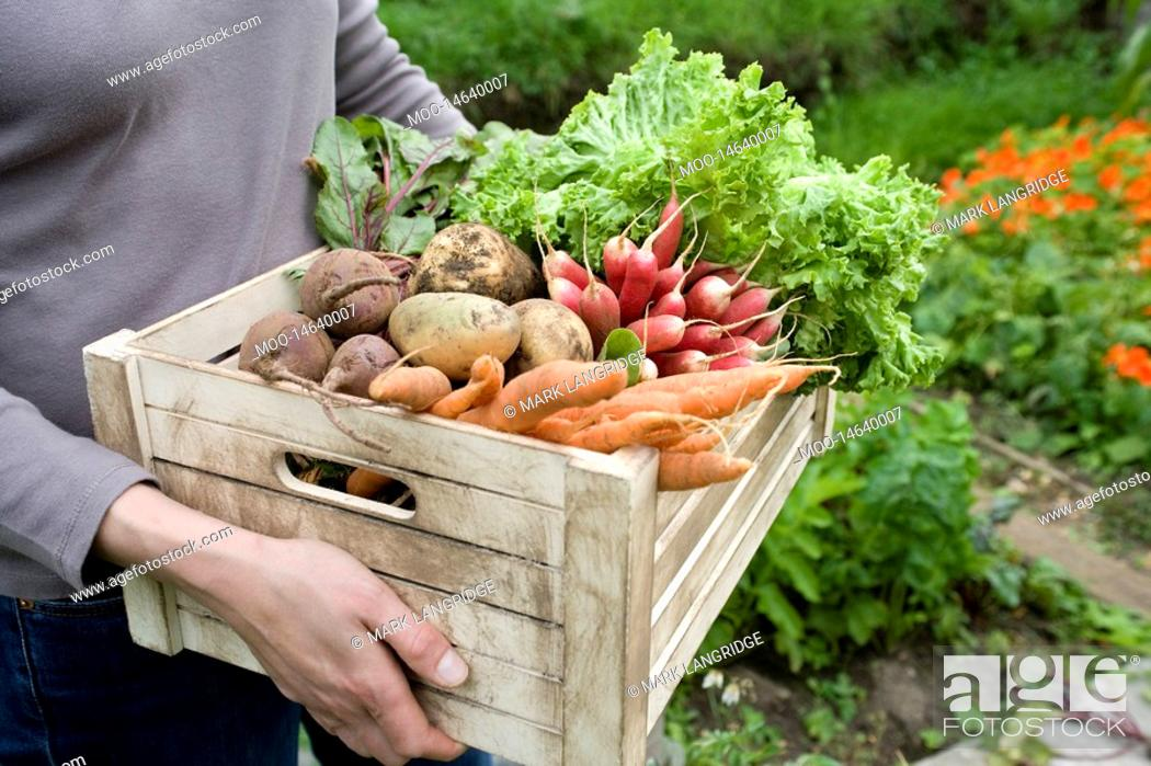 Stock Photo: Woman carrying crate of vegetables mid section.