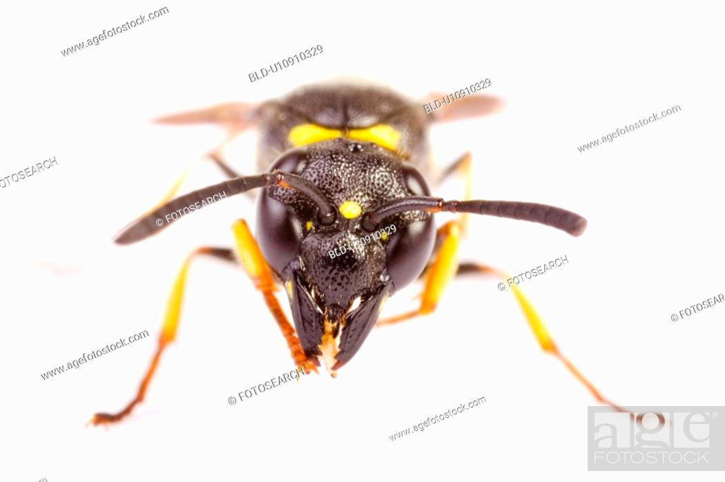 Stock Photo: Close-up to a bee.