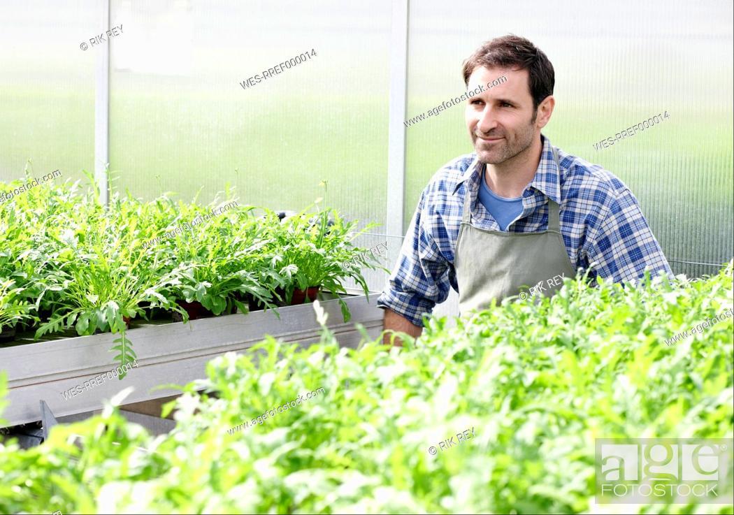 Stock Photo: Germany, Bavaria, Munich, Mature man in greenhouse between rocket plant.