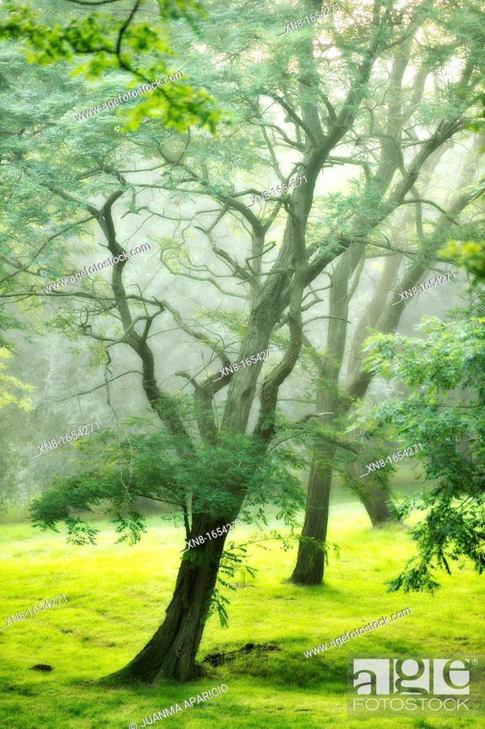 Stock Photo: Trees with fog.