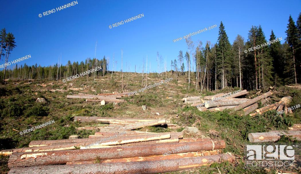 Stock Photo: Spruce logs on a clear cutting area  Location Kutumäki Suonenjoki Finland Scandinavia Europe.