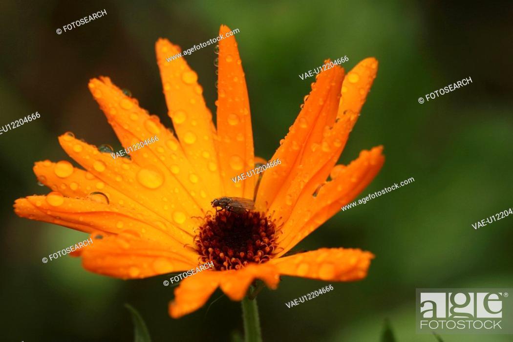 Stock Photo: stamen, petal, plant, grow, close-up, natured.