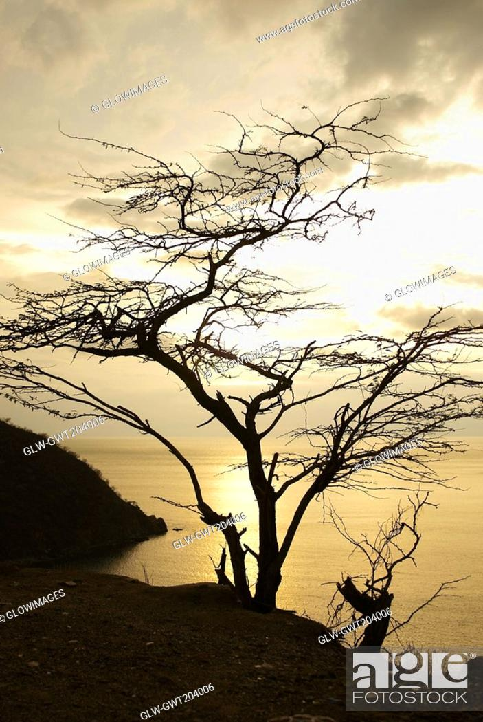 Stock Photo: Silhouette of a tree at sunset, Taganga Bay, Departamento De Magdalena, Colombia.