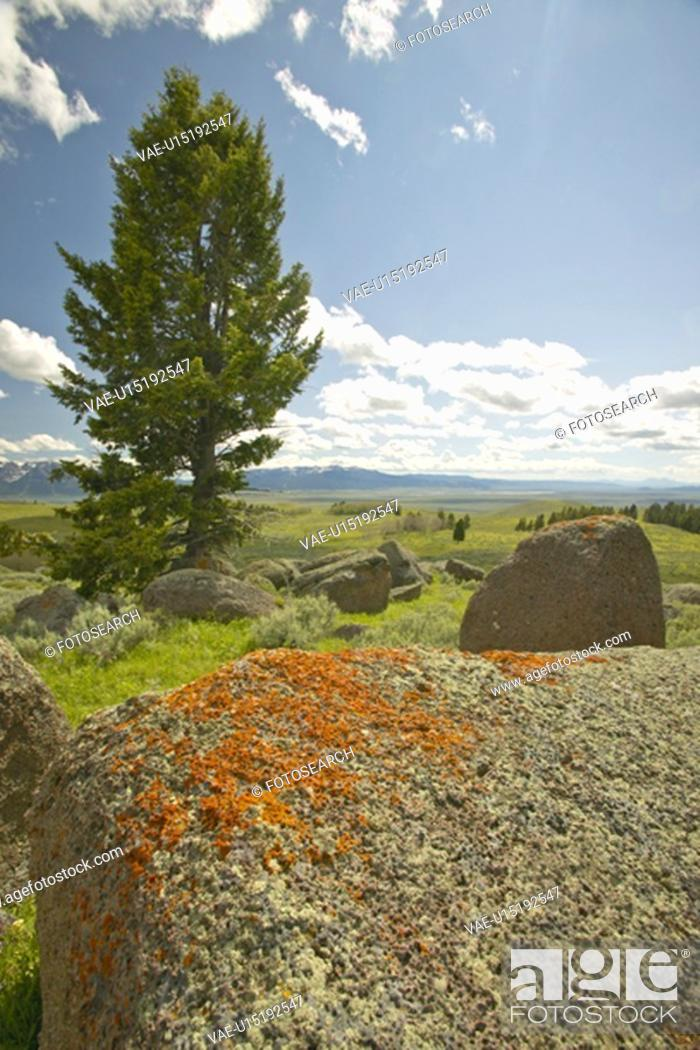 Stock Photo: Ancient orange lichens growing on rocks in Centennial Valley.