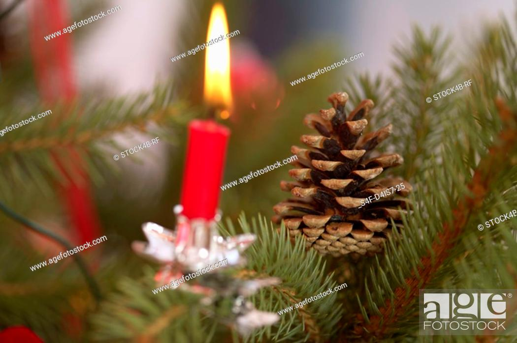Stock Photo: Burning candle and pine cones on Christmas tree.