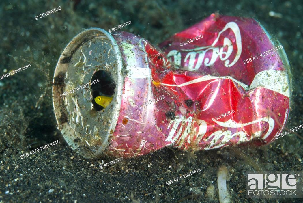Stock Photo: A Dinah's Goby, Lubricogobius dinah takes shelter inside a Coca-Cola can on the seabed, Lembeh Strait, Sulawesi, Indonesia.