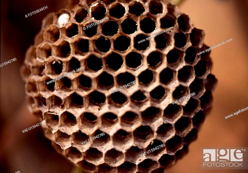Stock Photo: animal, nature, beehive, wild, scene, arthropod, landscape.