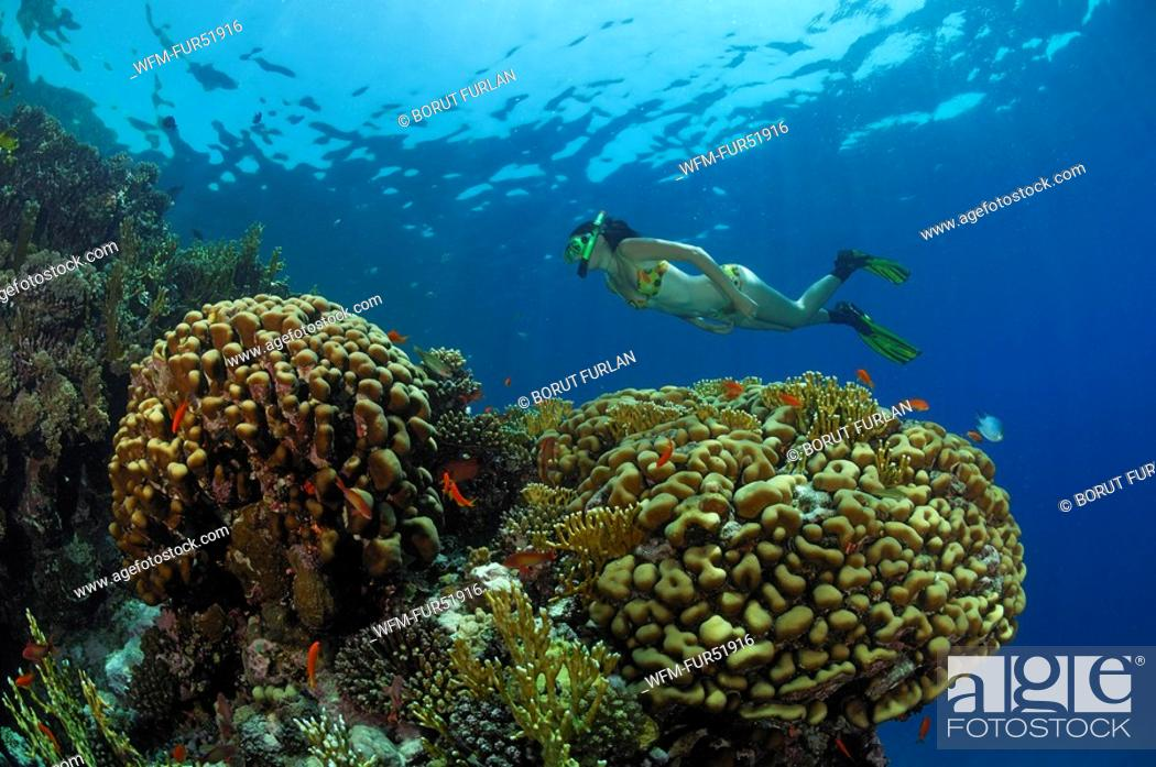 Stock Photo: Skin Diver over Coral Reef, Marsa Alam, Red Sea, Egypt.
