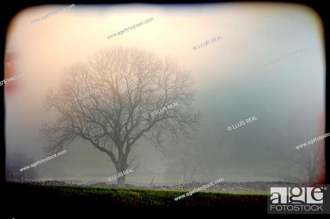 Stock Photo: Lone tree.