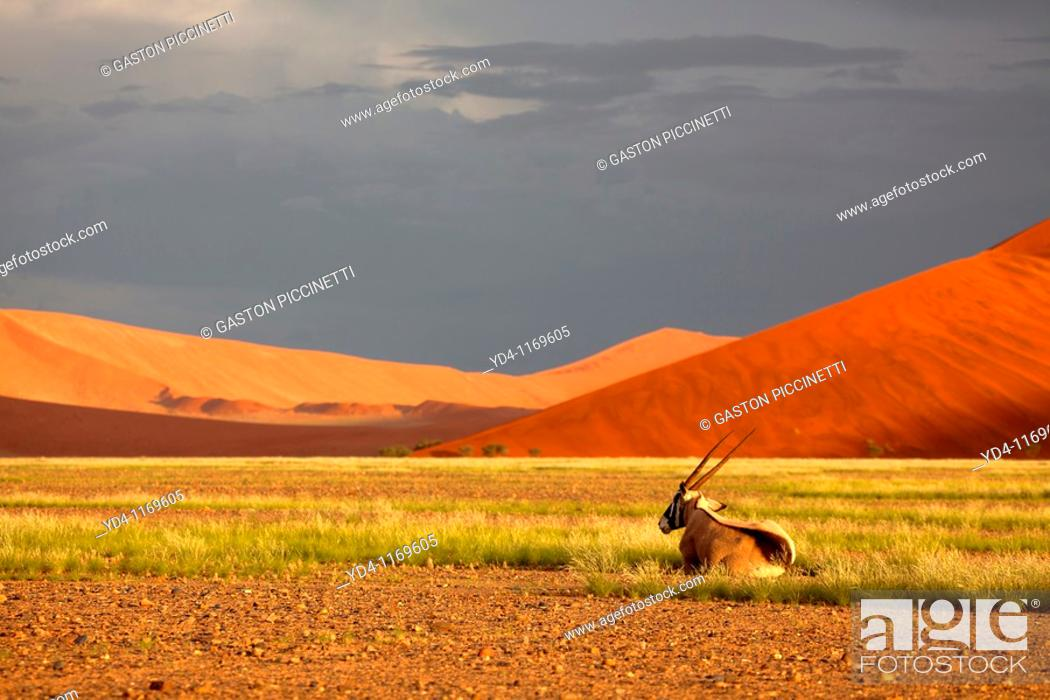 Stock Photo: Beautiful colours in the desert in rainy season, Namib-Naukluft National Park, Namib desert, Namibia.
