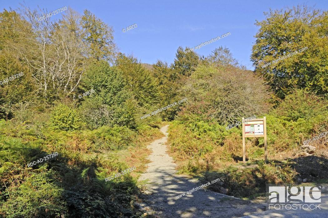 Stock Photo: Forestal area Selva de Irati Orbaitzeta Pyrenees province of Navarre Spain.