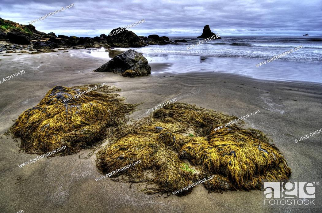 Imagen: Low Tide, beach at Ecola State Park, Oregon Coast.