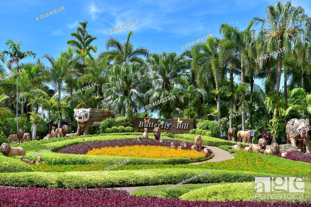 Stock Photo - Butterfly Hill, Nong Nooch Tropical Botanical Garden, Pattaya, Thailand