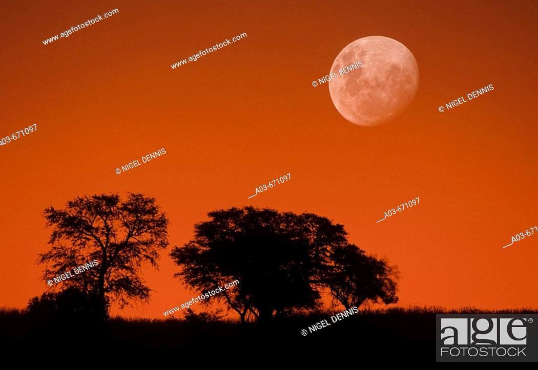 Stock Photo: Dusk sky and moon, Kgalagadi Transfrontier Park, Kalahari, South Africa, image not digitally manipulated.