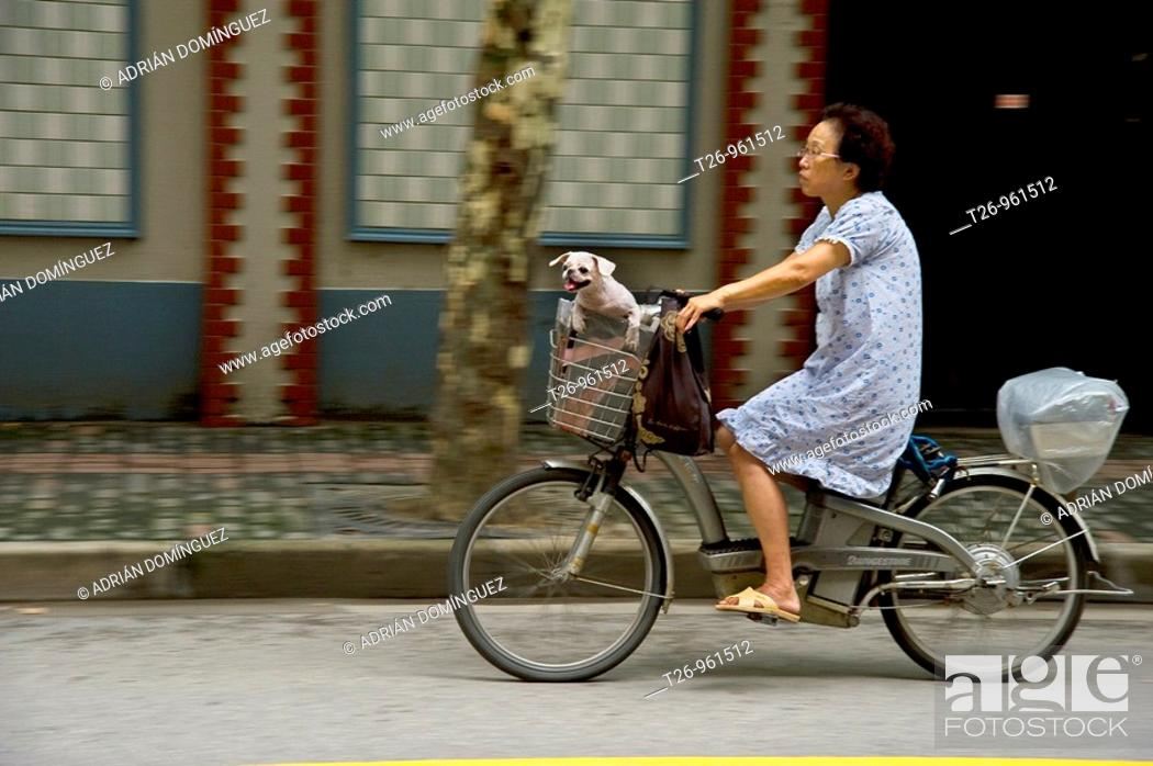 Stock Photo: An elderly woman takes her dog on bicycle. Shanghai, China.