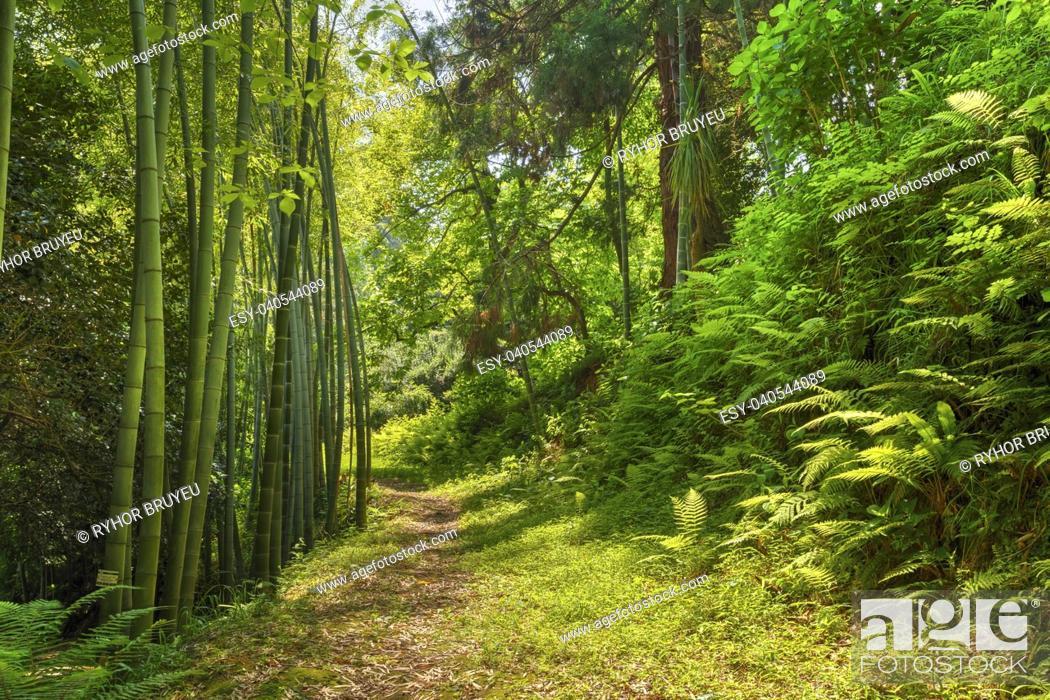 Stock Photo: Batumi, Georgia. Beautiful Road Lane Path Way Through Summer Bamboo Forest Woods And Fern Bushes. Nobody.