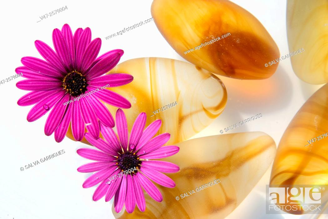 Stock Photo: Photograph of a pond with water and rocks amber and floating flowers. Photo studio on white background.