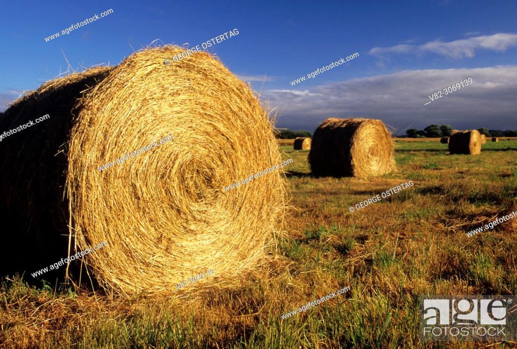 Stock Photo: Hay rolls, Nisqually National Wildlife Refuge, Washington.