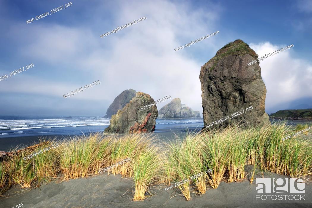 Stock Photo: Fog and dune grass at Cape Sabastian. Oregon.