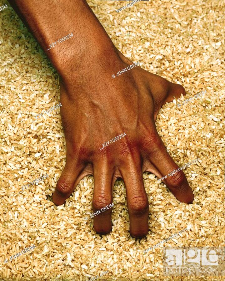Stock Photo: A hand reaches into a barrel of rice  This is an exercise used to build strength in the rehabilitation of hand injury patients.