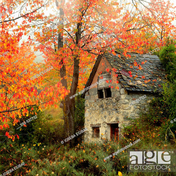 Stock Photo: Cherry tree and house. Village of Sin. Huesca province. Aragon. Spain.