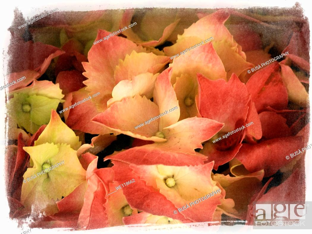 Stock Photo: Calender concept, flowers of the seasons. Part of series of 12 photos.