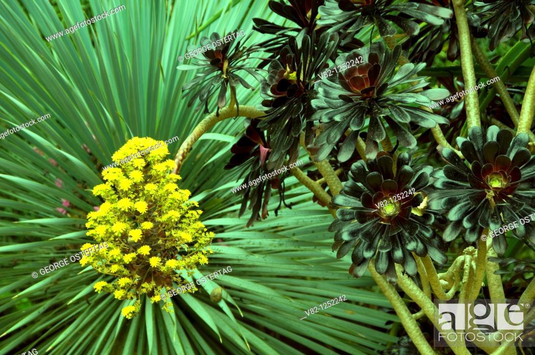 Stock Photo: Flowers, Balboa Park, San Diego, CA.