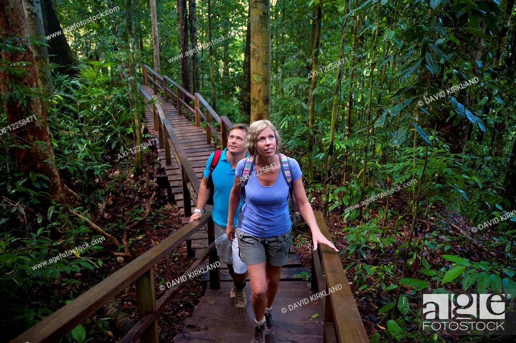 Stock Photo: Tourist on canopy walk at Ulu Temburong National Park; Brunei.