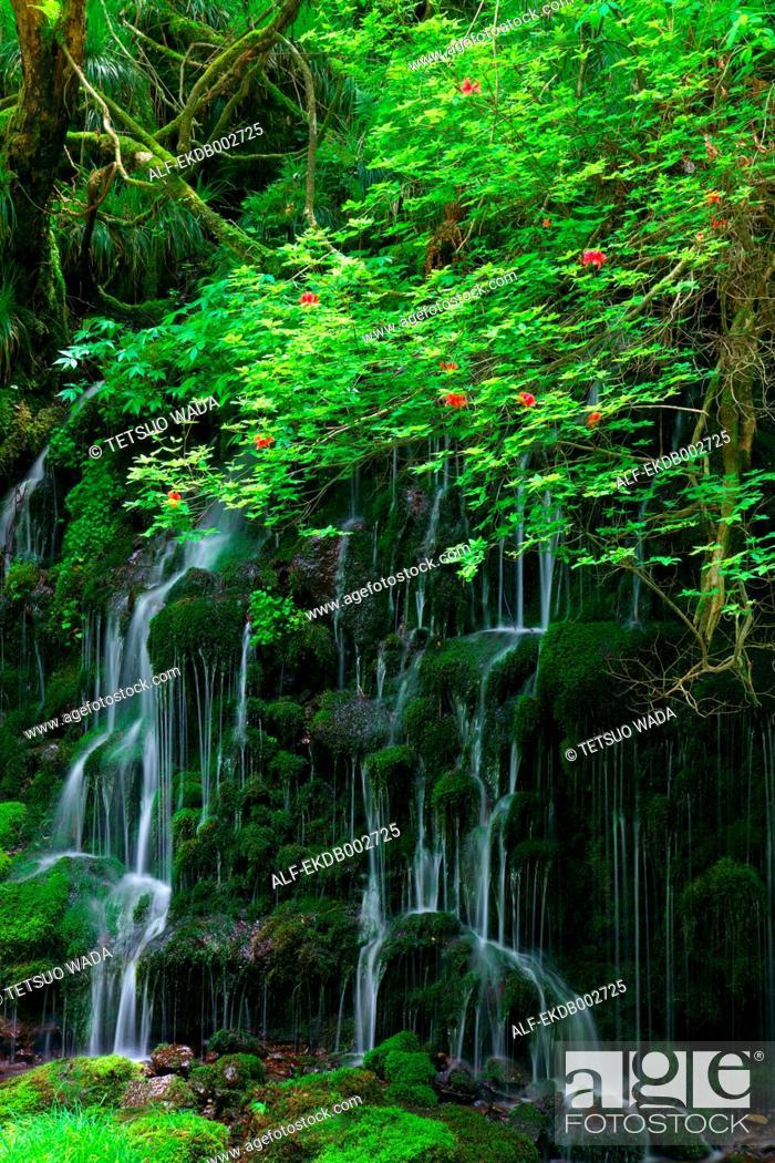 Stock Photo: Moto waterfall in Akita Prefecture.