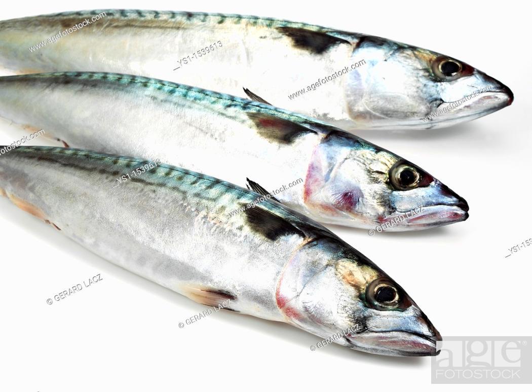 Stock Photo: Mackerel, scomber scombrus, Fresh Fish against White Background.
