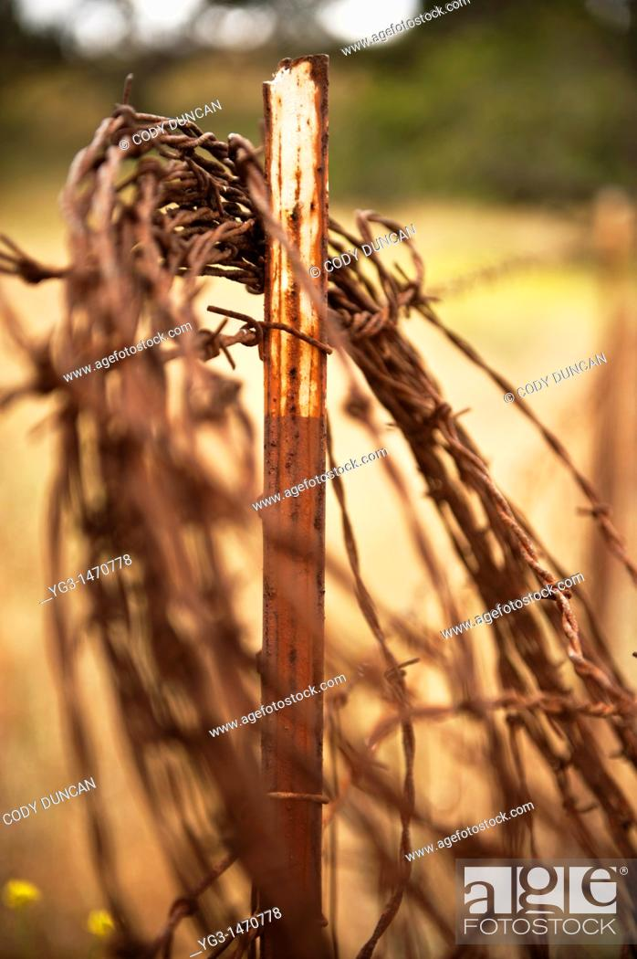 Stock Photo: Old rusty coil of barb wire on ranchland fence, California.