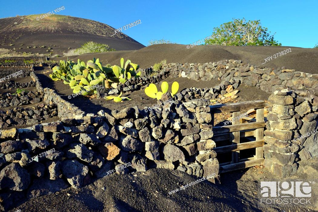Stock Photo: Lanzarote, Canary Islands. Traditional cinder rock walls protect cactus garden in volcanic soil landscape around La Geria.