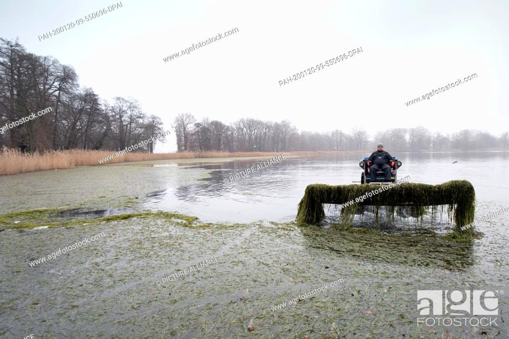 Stock Photo: 20 January 2020, Brandenburg, Potsdam: Wasserbauer Rocco Köhler of Wasser und Kulturbau Leegebruch GmbH removes from the surface of the Holy Lake with an.