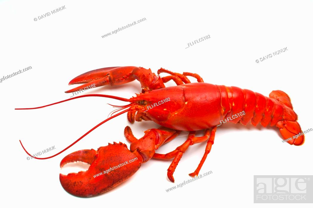 Stock Photo: Cooked Atlantic Lobster.