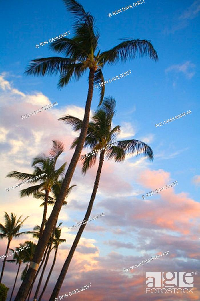 Stock Photo: Hawaii, Palm trees with pink clouds at sunrise.