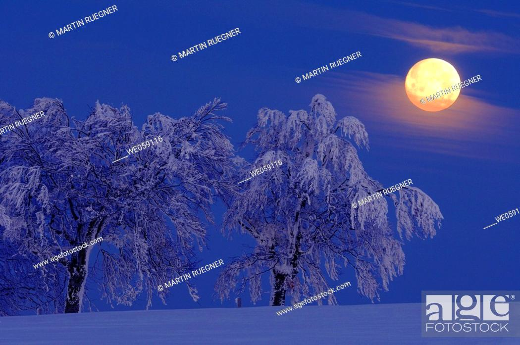 Stock Photo: Full moon over snow covered trees. Black forest, Baden-Wuerttemberg (Baden-Wurttemberg), Germany, Europe.