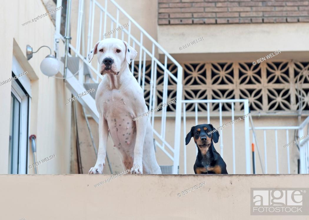 Stock Photo: Curious dogs.