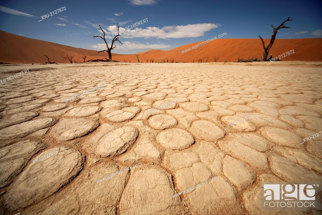 Stock Photo: cracks and patterns in the dry surface and dead trees at Deadvlei, Namib Naukluft Park, Namibia, Africa.
