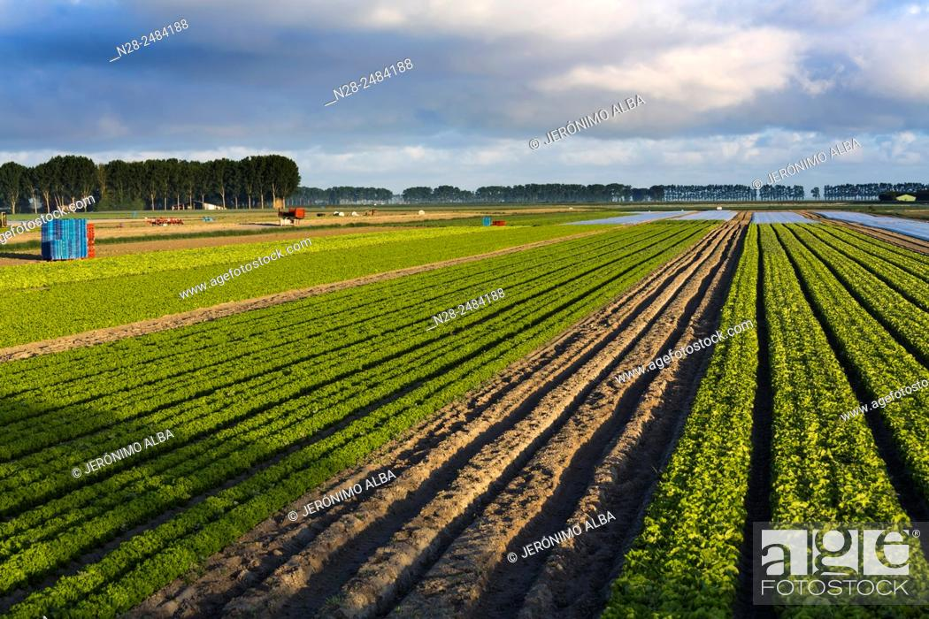 Stock Photo: Agriculture cultivation fields, Pontorson, Avranches, Lower Normandy, Manche, France, Europe.