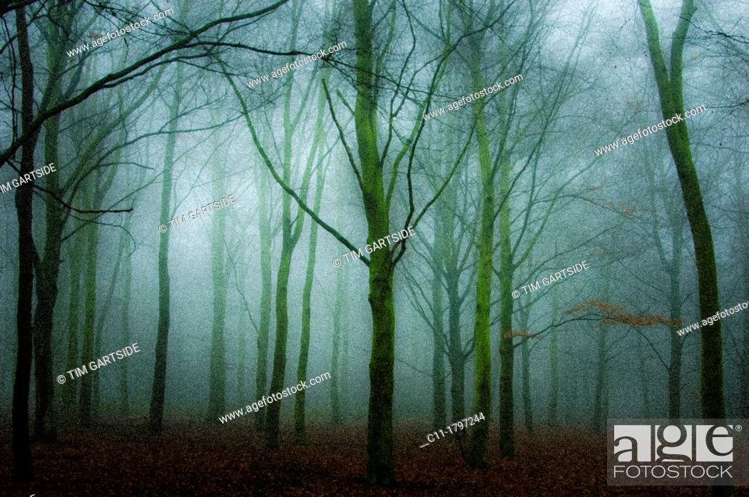 Imagen: trees in mist, kent, england, uk, europe.