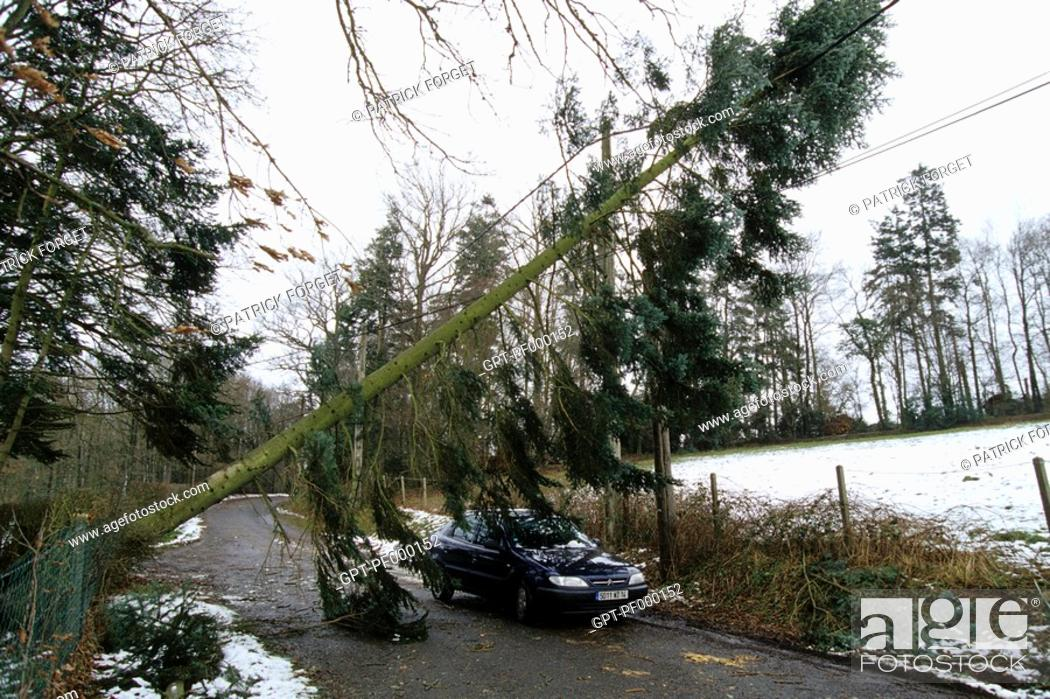 Imagen: UPROOTED TREES, BAD WEATHER AND DAMAGE CAUSED BY THE STORMS IN DECEMBER 1999, EURE, NORMANDY, FRANCE.
