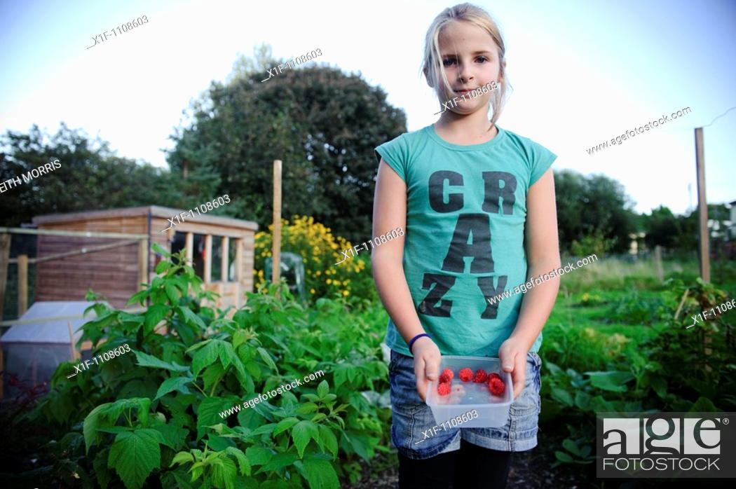 Stock Photo: 10 year old girl collecting fresh raspberries on her mother's allotment garden, UK.